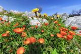 sizilianische Frühlingsblumen