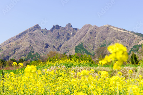阿蘇(根子岳)と菜の花