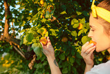 The woman during picking apricot in a garden outdoors