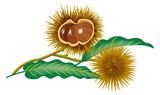 Chestnut branch clip art - 213182410