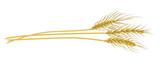 Wheat clip art - 213182460