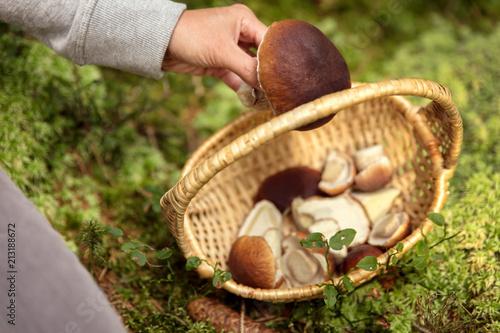 Leinwanddruck Bild Frau legt großen Steinpilz in den Korb, Pilze suchen im Wald