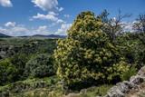 Randonnées en Lozère - Paysages -