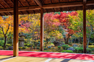 Colorful leaves in autumn park, Japan. © tawatchai1990