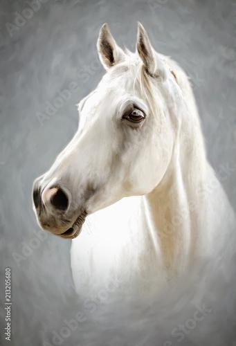 a white horse - 213205680