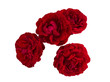 Four dark red roses