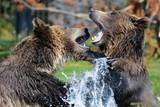 bear - 213233411