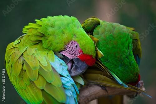 Fotobehang Papegaai Bali_Bird Park_Bird_12