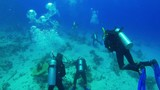 Divers Swims over Coral Reefs - 213249655