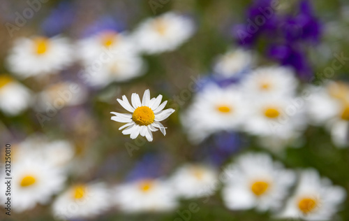 Poster Blurred of blooming wild flowers.
