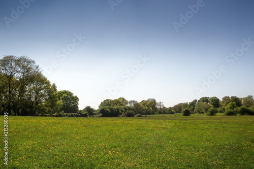 Foto Spatwand Zomer landscape of green fields