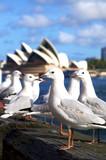 Walking in Sydney - 213271402