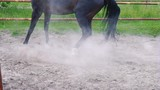 Dark beautiful horse takes off and runs down the paddock outdoor. The horse shows his temper - 213283687