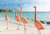 Flamingo walking on the beach