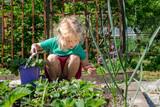 Little girl gardening - 213290838
