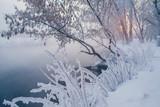 sunrise in winter forest - 213291456