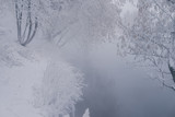 Calm winter landscape with iced trees - 213291461