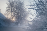Winter landscape with iced trees. - 213291466