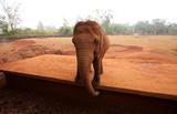 Big elephant in Safari Park Hainan