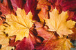 Maple leaves over rustic wooden background. The concept of fall and november.
