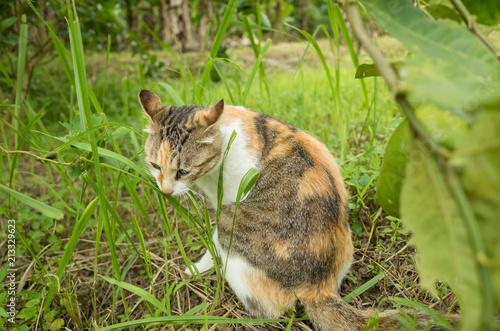 kitty on the grassland - 213329623