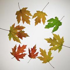Cerchio di foglie multicolori