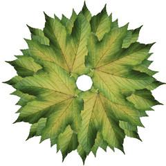 Mandala di foglie verdi