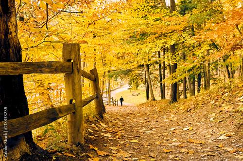 Canvas Oranje Autumn scene