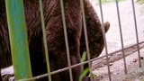 Brown bear found something to play with - 213336866
