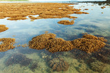 Beautiful coral reef during low tide water in the sea at Phuket island. - 213365036