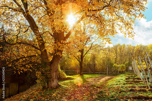Plexiglas Herfst Beautufil autumn rural landscape