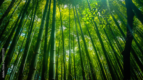 Canvas Bamboe Bamboo Forest