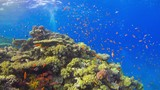 Tropical Fish on Vibrant Coral Reef - 213375880