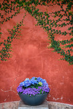 Decorative flowerpot with blue and purple flowers in front of a red stone wall. - 213382096