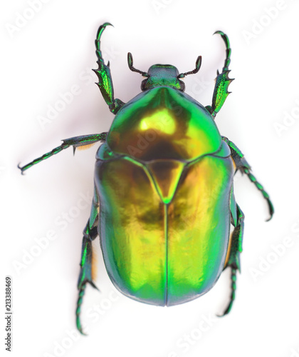 Green beetle on white. - 213388469
