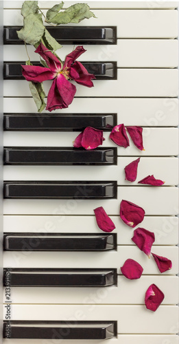 Foto Murales A dried rose petals on a piano keyboard