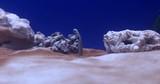 Atlantic Garden Eel CENTER FRAME against BLUE BACKGROUND - 213435836