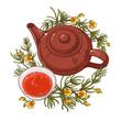 rooibos tea illustration