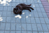 cat on the pavement - 213448276