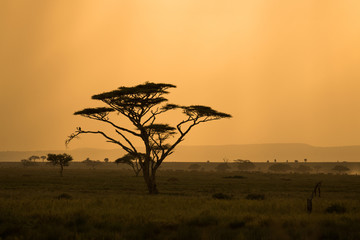 African savannah with lonely tree