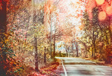 Beautiful sunny autumn road with red fall foliage trees . Travel , seasonal outdoor nature - 213465606