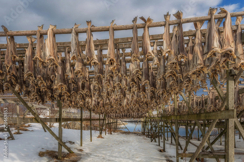 Stock fish on racks to dry, Lofoten, Norway © Patrycja