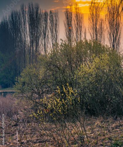 Canvas Cappuccino Spring landscape
