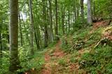 il sentiero nel faggeto - 213477646