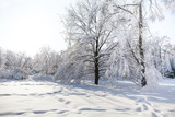 Snowfall in the park, snow covered big tree landscape. Beautiful winter weather concept. - 213486443