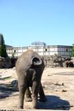elephant rump