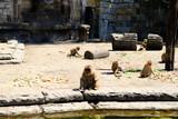 eating monkey - 213492453