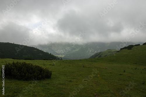 alpine meadow on a foggy day