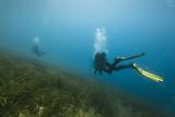 Underwater diving - 213528469