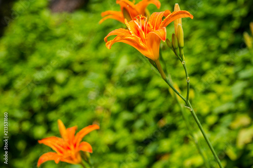 Fiori Gialli Arancio.Fiore Giallo Arancione Buy Photos Ap Images Detailview